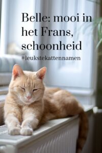 Belle als kattennaam