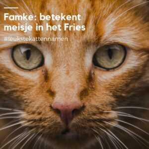 Famke friese kattennaam