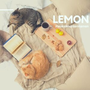Lemon als kattennaam