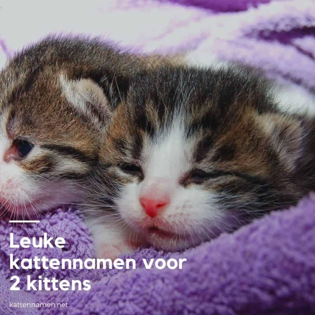 Kattennamen voor 2 kittens