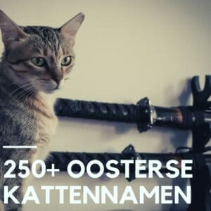 250+ Oosterse kattennamen uit Japan, China & Korea