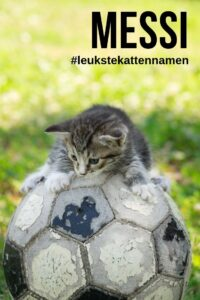 Messi als kattennaam